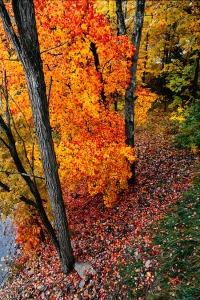 New England Fall Color